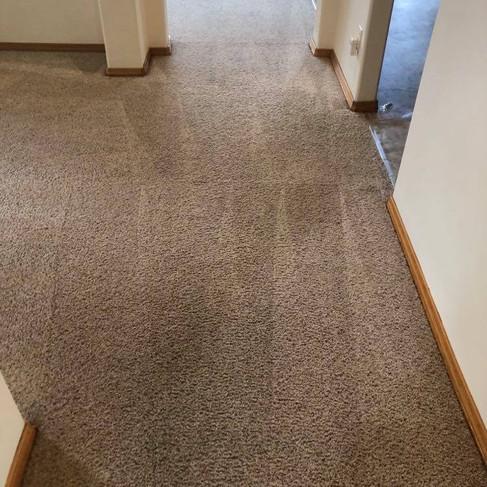 Carpet 2 After