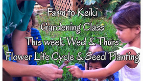 This Week In Gardening Class