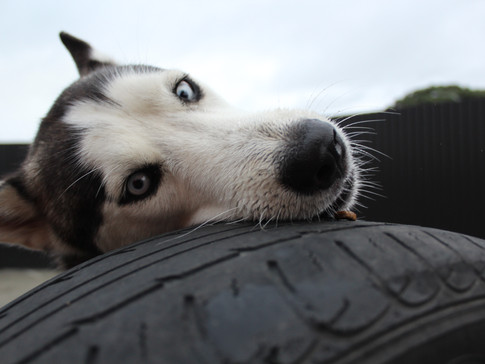 Rocky and his tyre!
