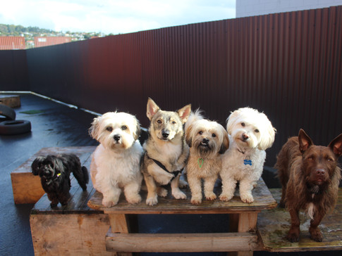 Small dogs crew on a damp Wednesday