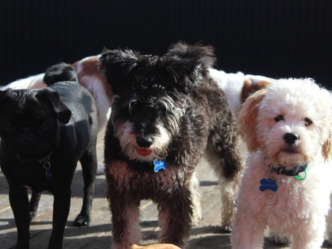 Sid, Chase and Theo enjoy the sun