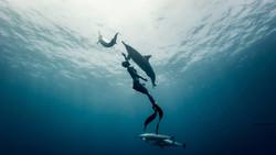 A Family Oceanic