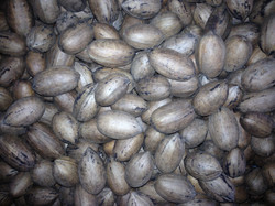 wholepecans1