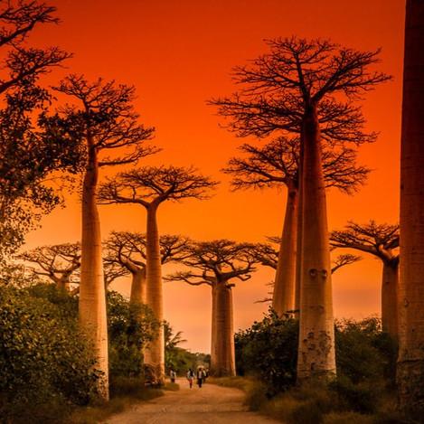 VOYAGE EXOTIQUE A MADAGASCAR