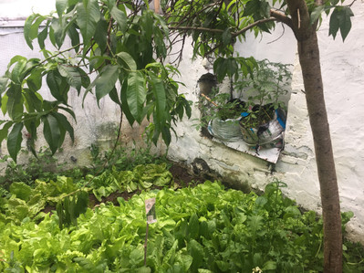 spring salads under the peach tree.jpeg