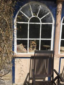 Kai at the window.jpeg