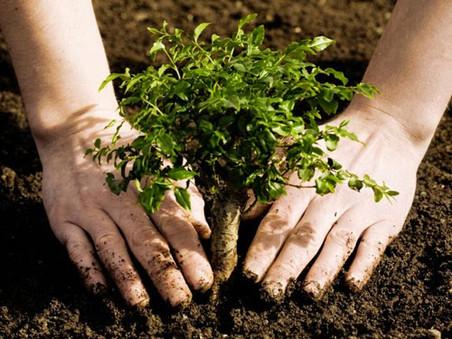 Plantemos mas arboles!!!
