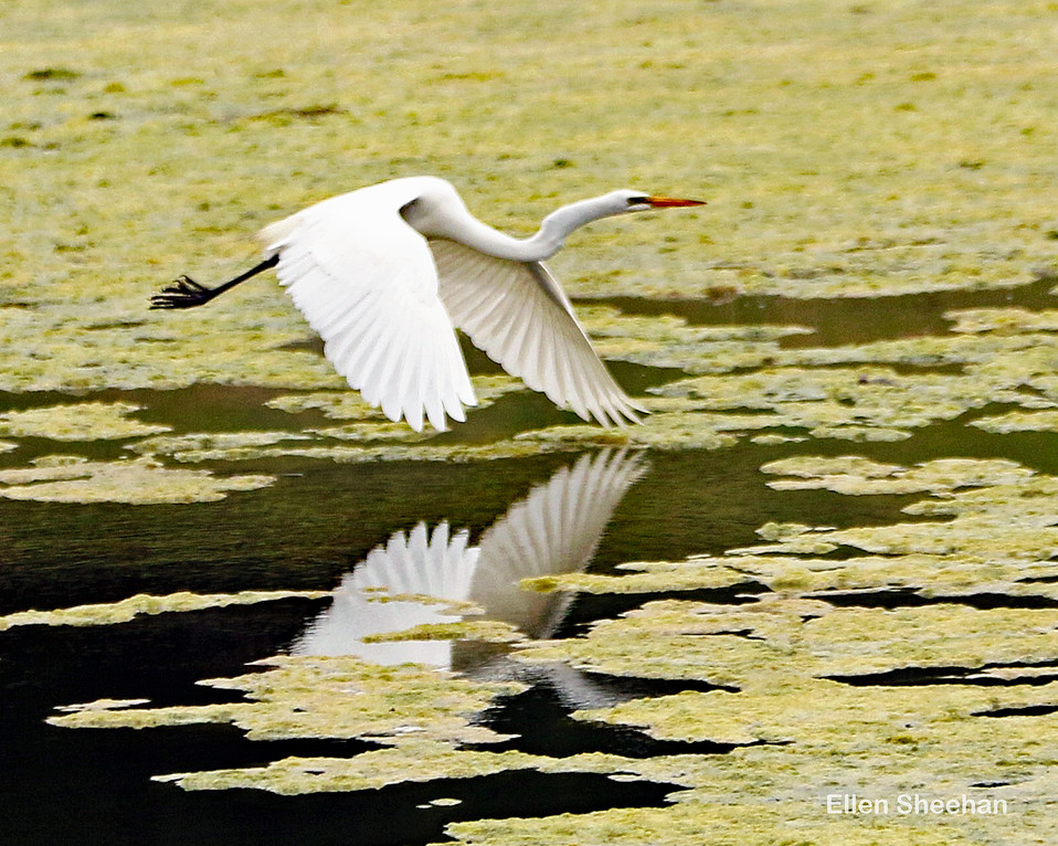 Wing reflection
