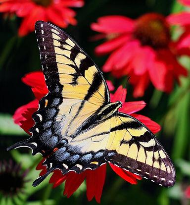 0 PLS Butterfly Card .jpg Crop .jpg
