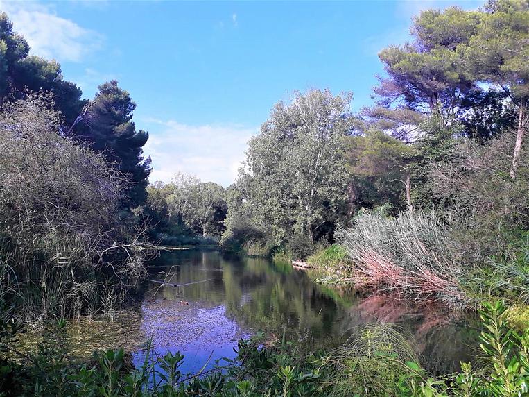 Lac du domaine de la Coudoulière