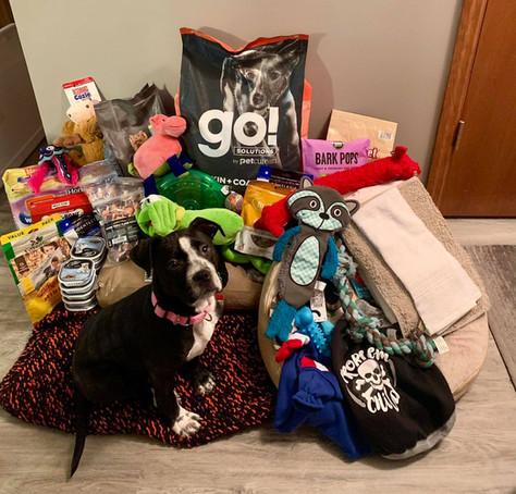 Dog with doggy goods.jpg