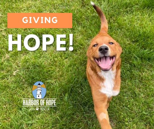 Giving Hope photo.jpg