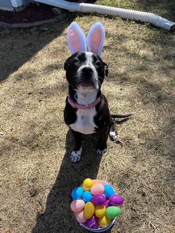 Dog with bunny ears.jpg