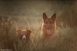 Немецкая овчарка Макси и БК Джерри