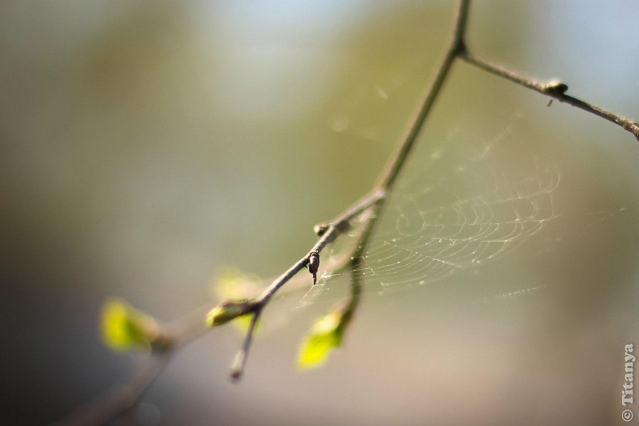 Пентхаус для паука