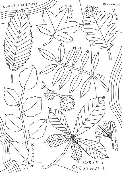Tree Leaves Colouring Sheet_lucyscott_20