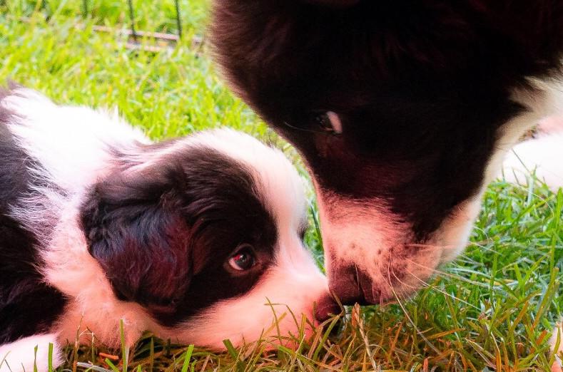 Zeus und A-Wurf Babies