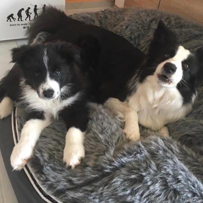 Zeus und Enya