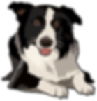 Border Collie Clipart.png