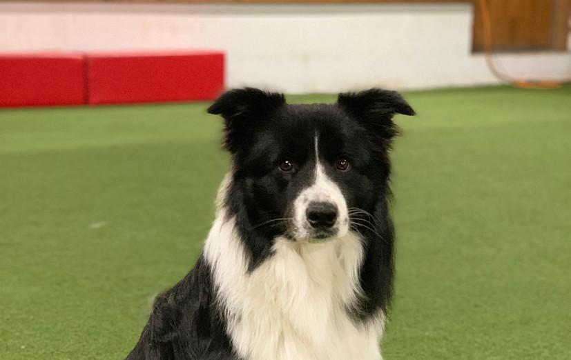 Zeus Training 2
