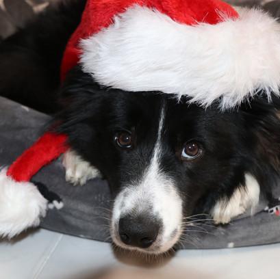 Zeus Weihnachten