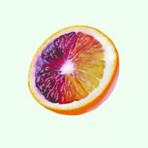 Blood Orange Vector
