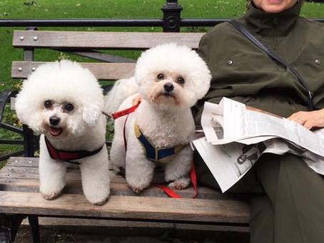 Blending dogs