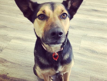 Why you can and should use a food treat in a fearful dog...