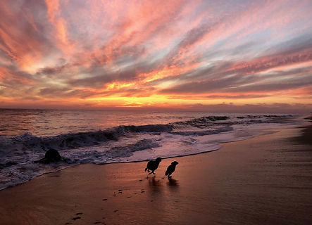 Two silhouetted happy dogs running on the beach at sunset