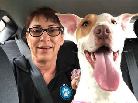 Animal Sense Perth Preferred Trainers
