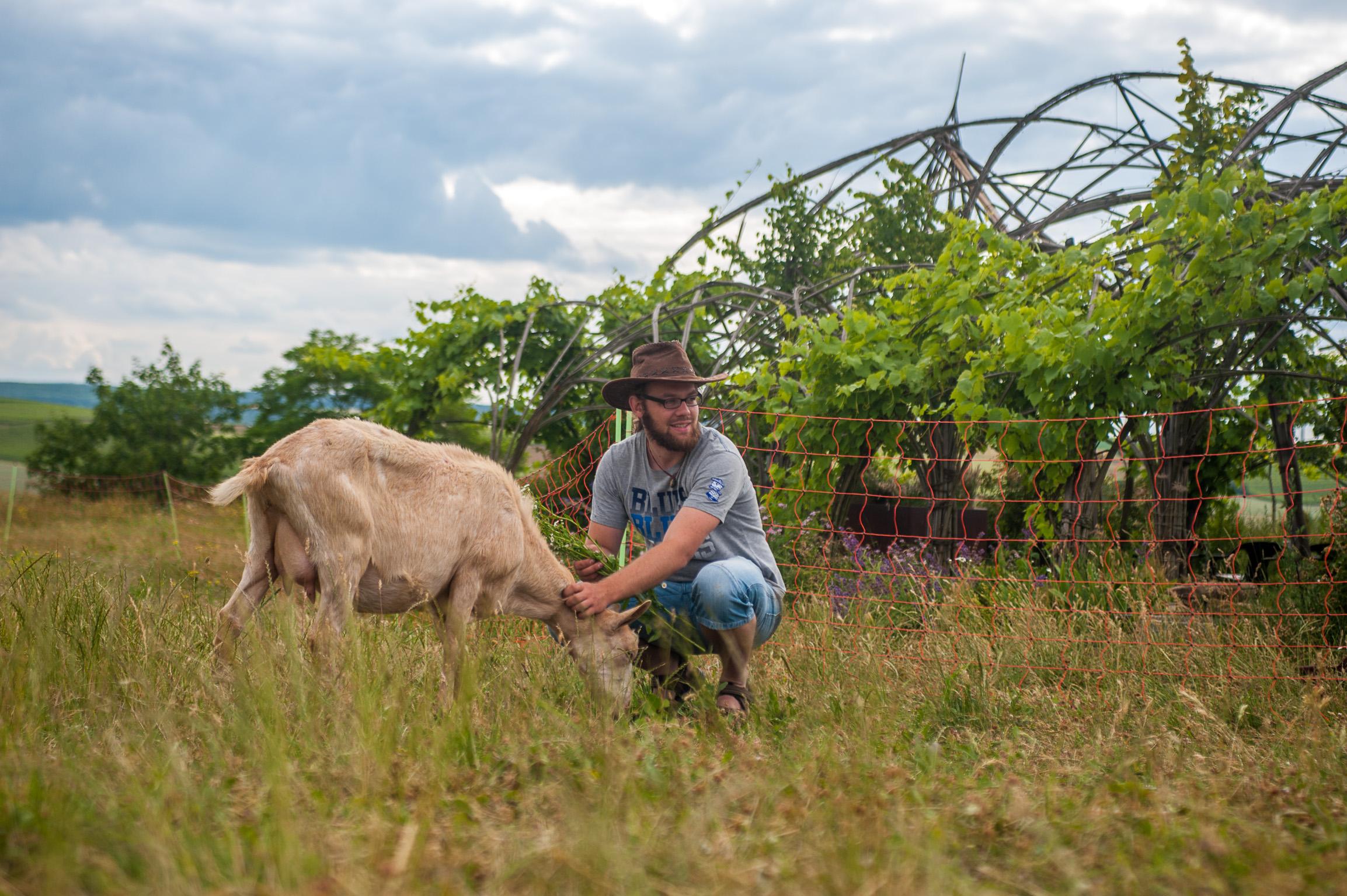 1406_goats_0079_kurz13cm