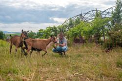 1406_goats_0077_kurz13cm