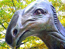 Hadrosaurus Foulkii detail of head.jpg