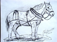 Percheron Study, graphite.JPG