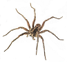 Tips To Reduce Spiders in Your House