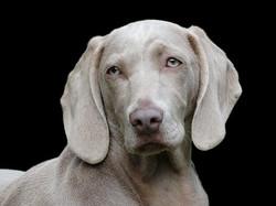 dog-1742295__340