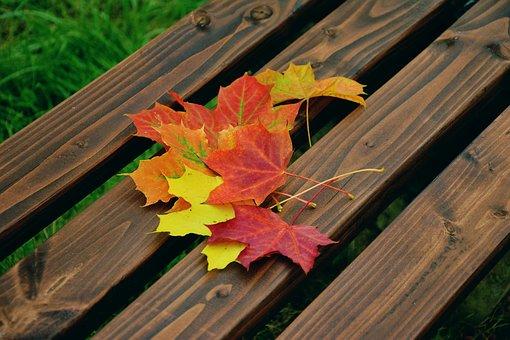 fall-foliage-1740841__340