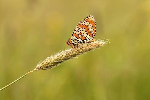 butterfly-1757511__340