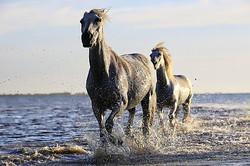 horse-1542480__340