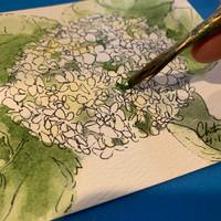 Hydrangea, Work in Progress