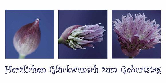 Geburtstagskarte Schnittlauchblüte