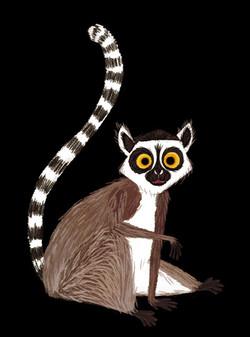 Lemur maki catta
