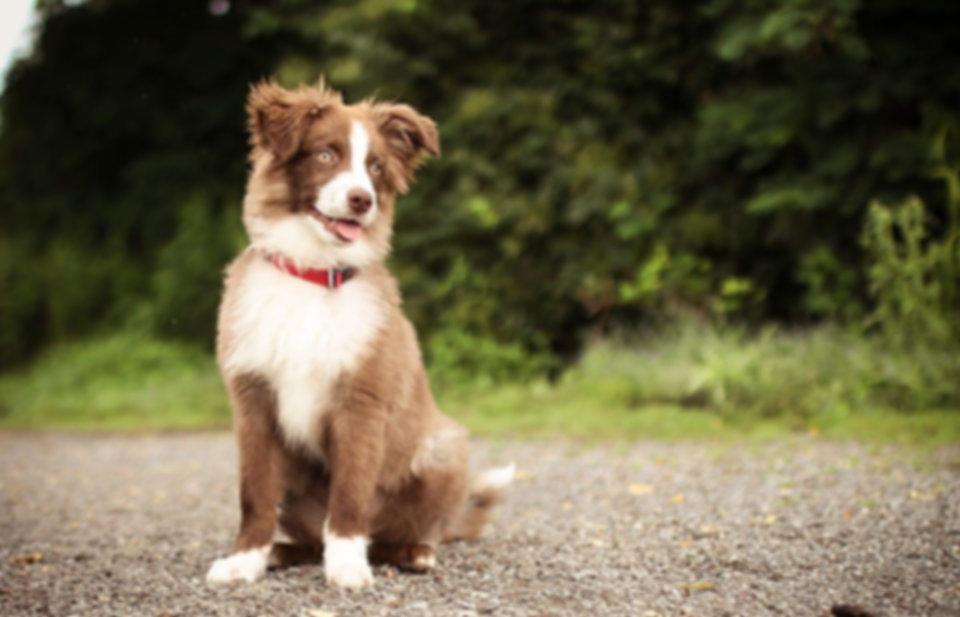 dog-2099387_960_720.jpg