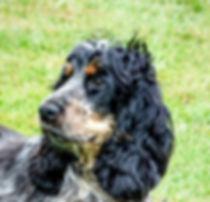 dog-1939235_1280.jpg