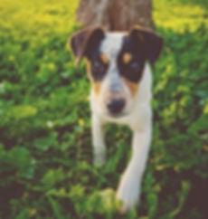 dog-1082096_960_720.jpg