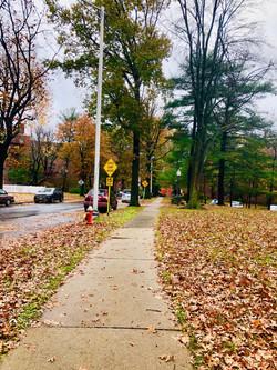 Linwood Park Fall 3