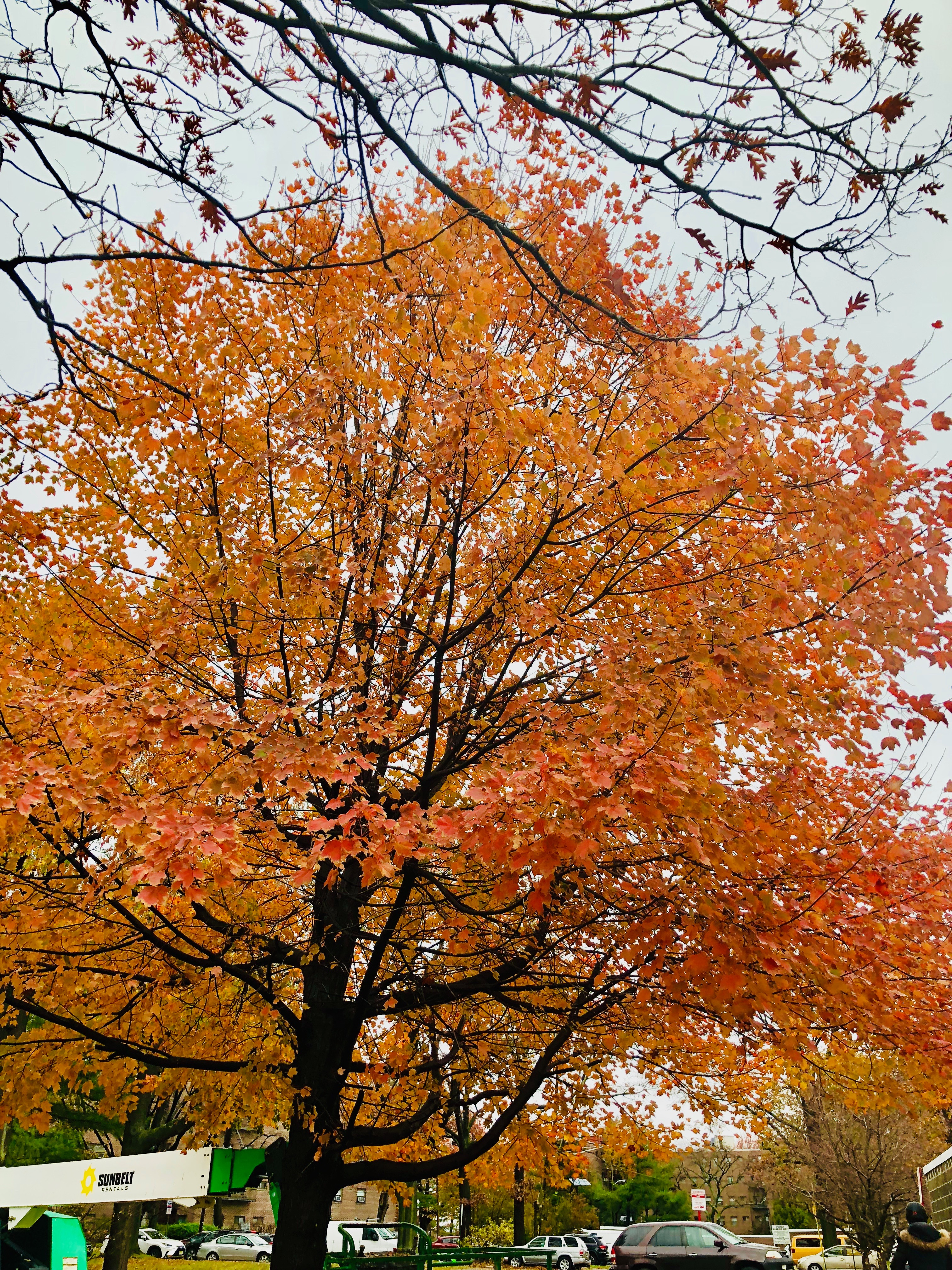 Linwood Park Fall 2