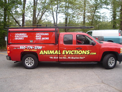 Animal Evictions