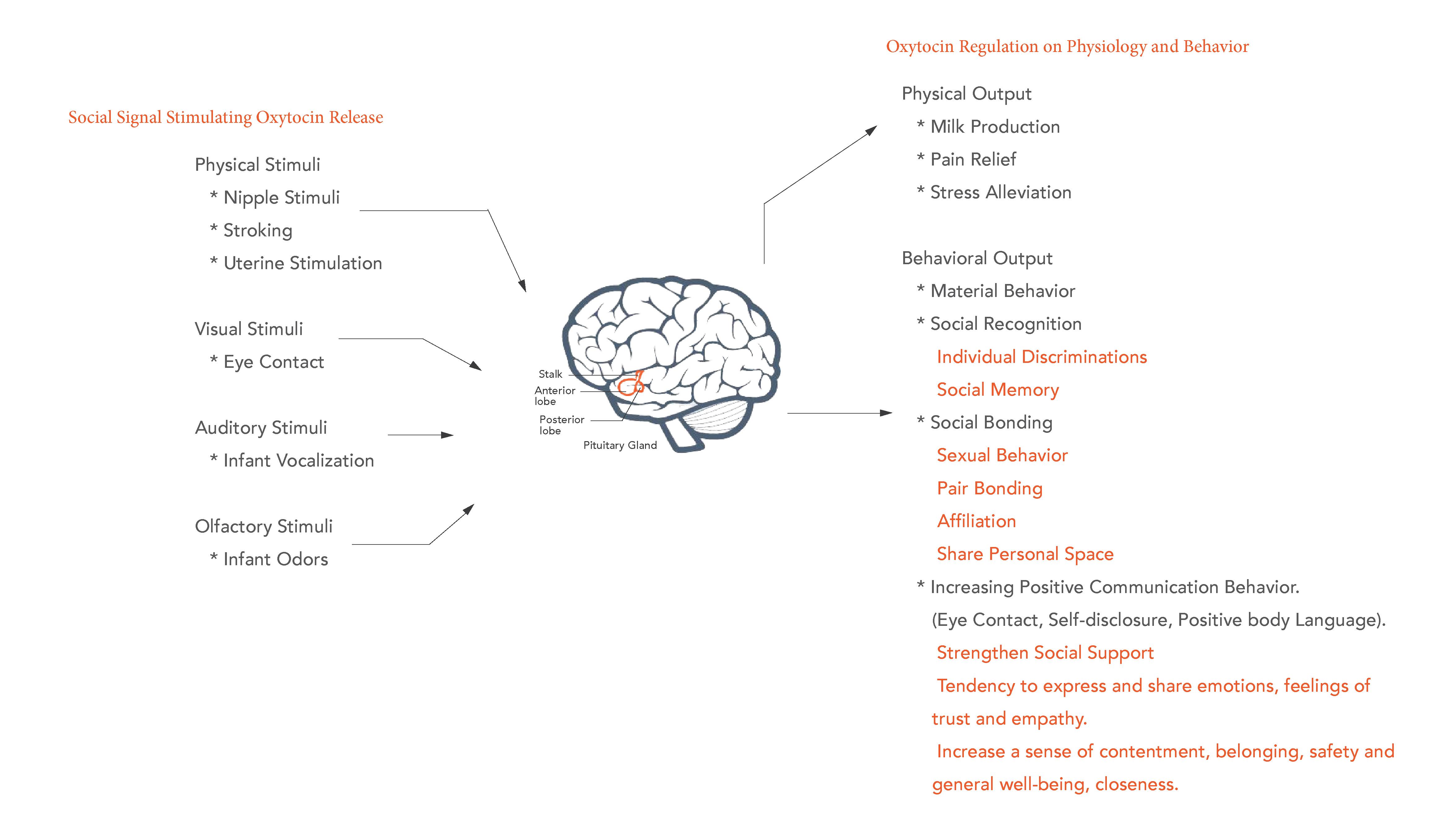 Oxytocin brain