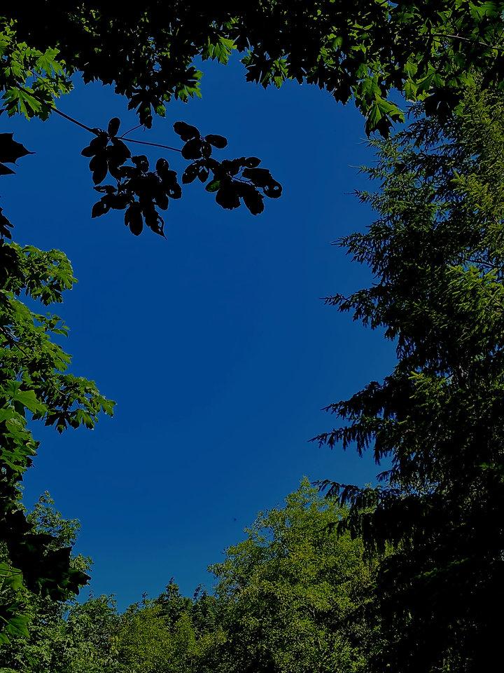 Erosia%20Sky%20and%20Trees_edited.jpg